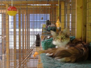 Happy cats at Haytor Cattery