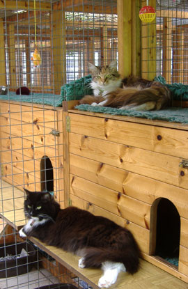 Happy cats at Haytor Cattery, Dorking