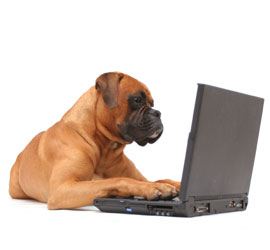 Laptop Dog Contacting Haytor Kennels, Dorking